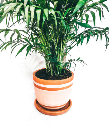 White lines high curved pot N2 - D20 H21