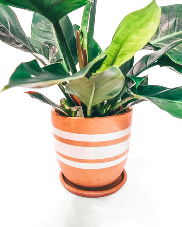 White lines high curved pot N3 - D25 H25